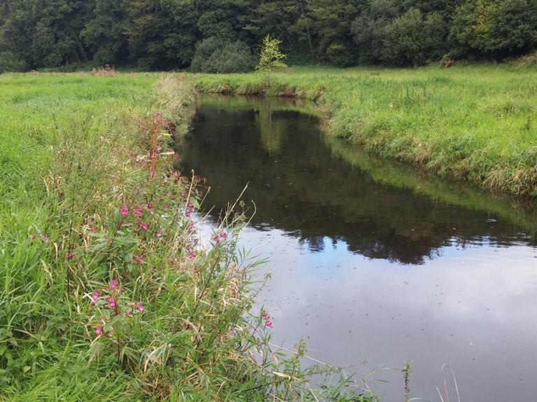 Mesures morphologiques et d'habitats sur cours d'eau (35-22-29-56-44)