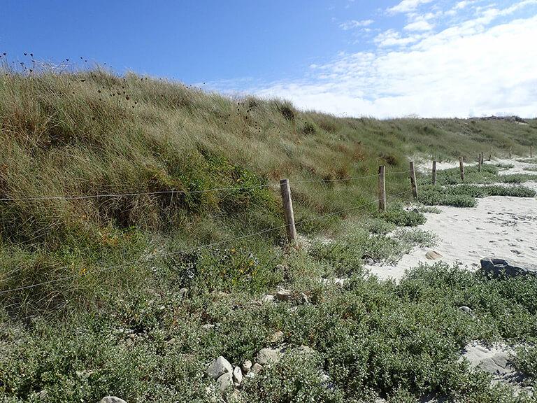 Plan de gestion des dunes de Sainte-Marguerite (29)